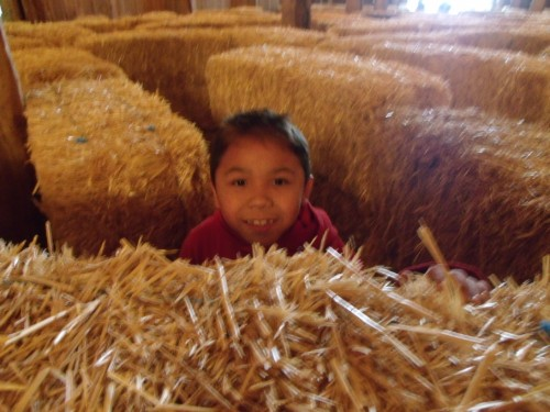 boy popping up behind a hay bale