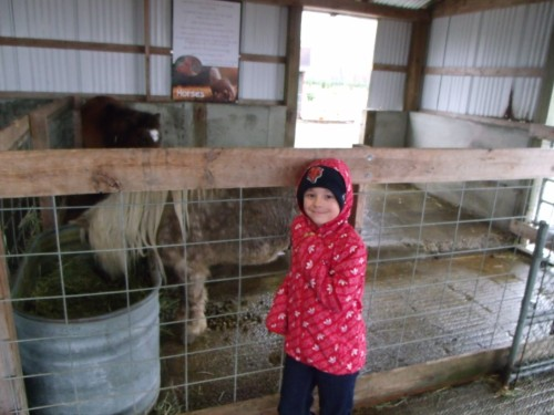 student visiting the ponies