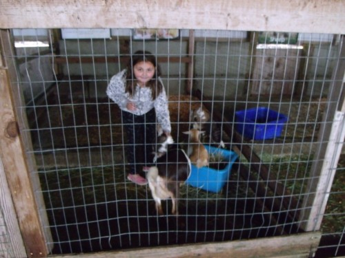 girl in the cage with the goats, petting the goat.
