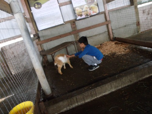 student petting a small goat