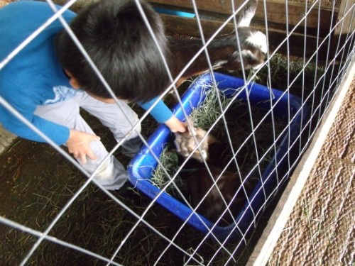 student petting an animal