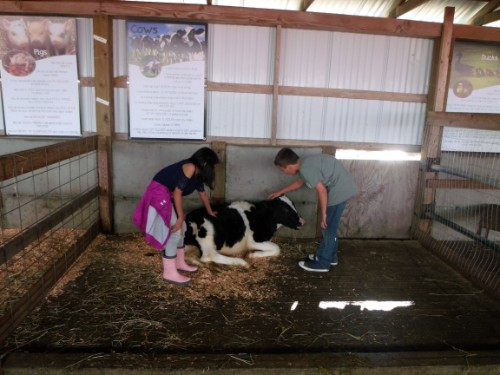 students petting a cow.