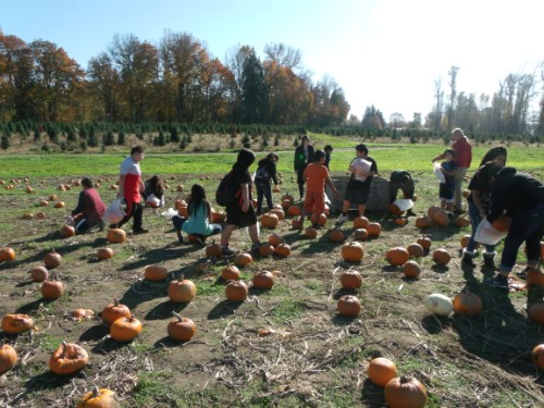 finding the right pumpkin in the field!