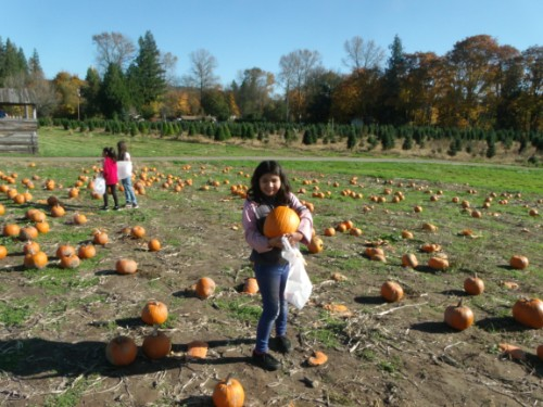 students picking out pumpkins
