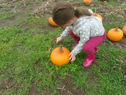 Kindergartner picking out the perfect pumpkin