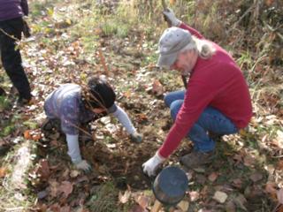 tree planting 10