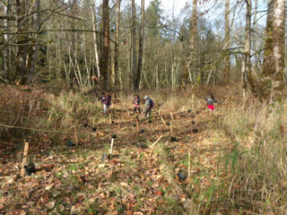 tree planting 15