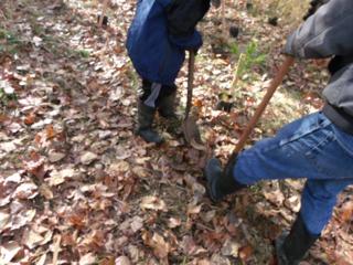 tree planting 17