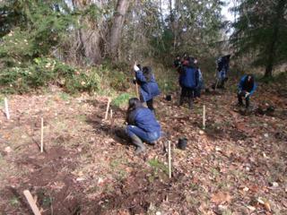 tree planting 20