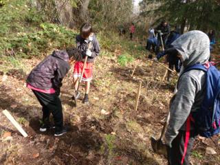 tree planting 21