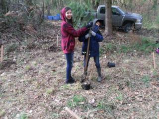 tree planting 23