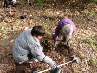 tree planting 25