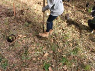 tree planting 27